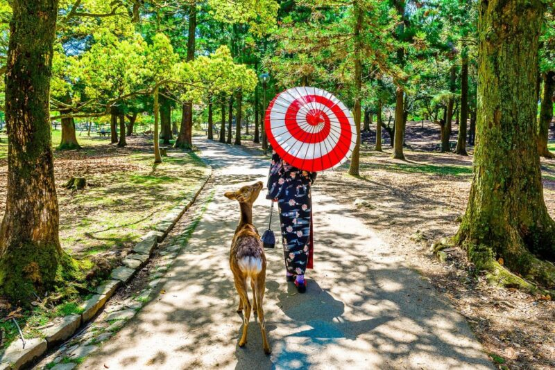 Walking with little deer at Nara-Koen Park