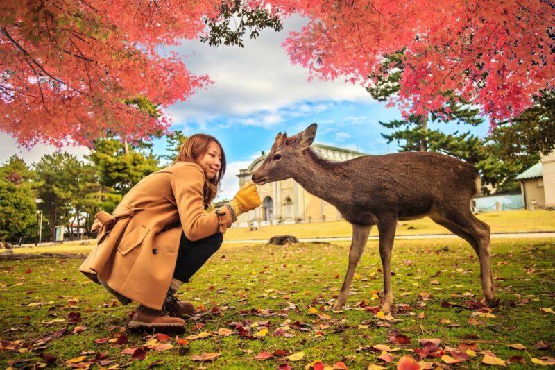 Deer at Nara-Koen Park