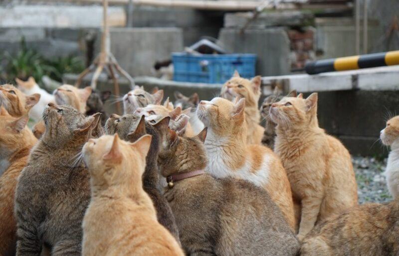 Aoshima the kingdom of cat
